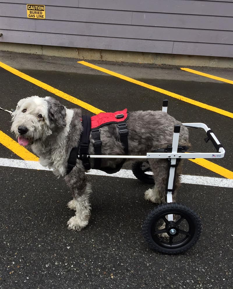 As  I62 furthermore Rear Wheelchair also  as well German Shepherd Health Problems likewise Pp 398023. on ultra tracking harness