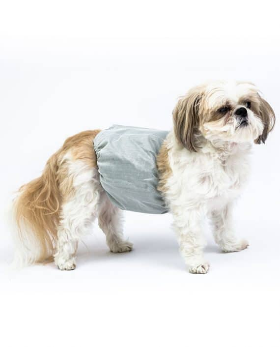 male_wrap_shih_tzu